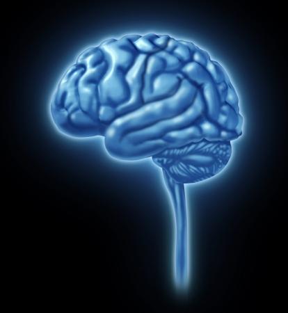 l�bulo: Brain secciones del l�bulo divisiones de la actividad mental l�bulos neurol�gica aislada Foto de archivo