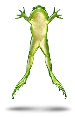 Frog Jumping up in the air as a dynamic green amphibian on a white background in an animated action pose of escape and as a symbol of animal ecology and nature conservation Stock Photo - 14345328