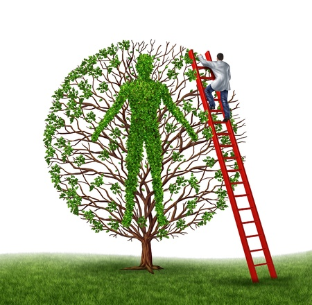 three dimensional shape: Prevent disease and preventive medicine health care medical concept with a doctor or surgeon working on a human body in the shape of a gree tree with leaves and branches on a white background  Stock Photo