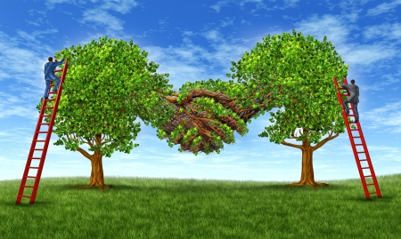 merging together: Building business trust and growing a financial partnership through an agreement as two growing trees merging together in a hand shake shape with  businessmen on ladders working together for success  Stock Photo