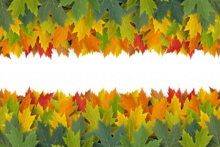 Autumn Leaves border design concept with maple leaf foliage arranged in a multi colored seasonal themed concept as a symbol of the fall weather on a white background  Stock Photo - 14837712