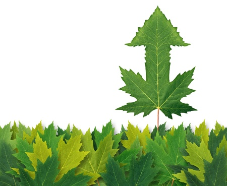 Best financial strategy with aan arrow leaf standing out from the crowd from a bunch of leaves as a business symbol of success and winning leadership  Stock Photo - 14837708