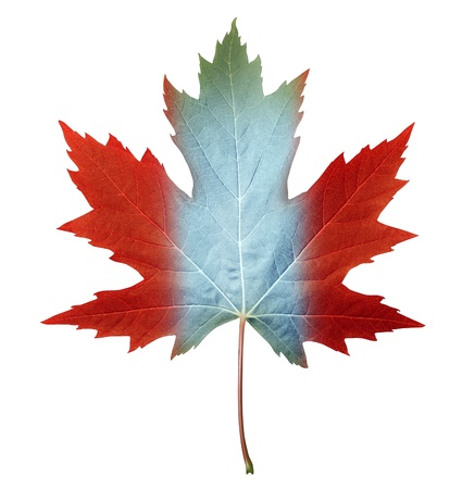 canadian flag: Canada maple leaf with the canadian flag colors painted on the fall foliage as a symbol of nature and pride for the North American country isolate on white