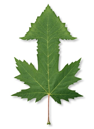 the future growth: Growing financial success with a green maple leaf in the shape of an upward pointing arrow as a business concept of future growth