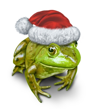 Holiday frog as a green amphibian wearing a Christmas hat as a festive symbol of nature and conservation during the season of gift giving on a white background