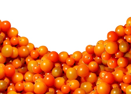 Cherry tomato border with a heap of juicy natural mixed golden red organic sweet tomatoes representing the concept of eating delicious healthy food of fresh fruits and vegetables with a blank white background  Stock Photo - 15206269