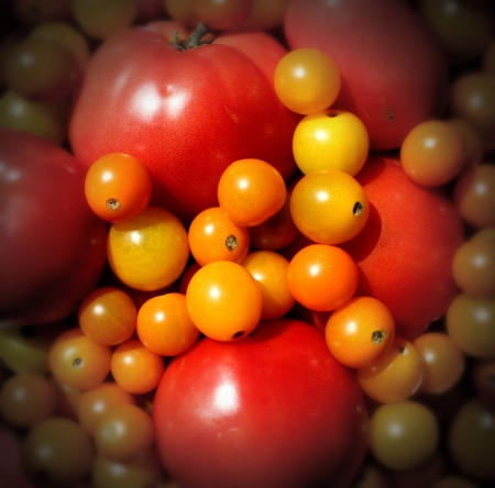 Market tomato wallpaper with a heap of juicy natural mixed red and golden organic tomatoes representing the concept of eating delicious healthy food of fresh fruits and vegetables Stock Photo - 15086880