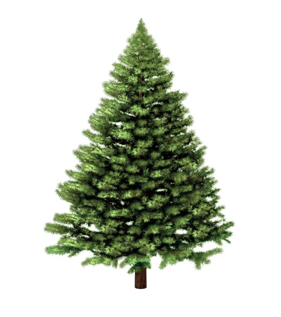 fir: Christmas tree isolated on a white background without any decorations as a festive evergreen single plant with detailed pine needles for the holiday season including New Year  Stock Photo