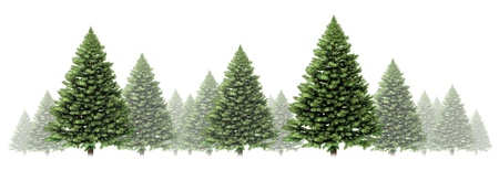 Pine tree winter border design with a group of green Christmas trees on a white background as a festive evergreen forest element with fog and snow for the holiday season including New Year  photo