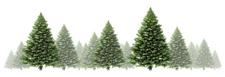 arbol de pino: �rbol de pino del invierno Frontera del dise�o con un grupo de verdes �rboles de Navidad sobre un fondo blanco como elemento festivo bosque siempre verde, con niebla y la nieve para la temporada de vacaciones, incluyendo el A�o Nuevo Foto de archivo