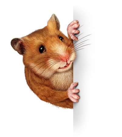Hamster holding a blank white card with realistic fur and paws that hold and grip a billboard sign advertising and marketing an important and special message pertaining to animals and pets  Stock Photo - 15584412