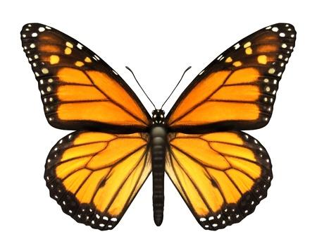 여름과 자연의 아름다움을 나타내는 비행 철새, 곤충, 나비 등의 평면도에 열려 날개를 가진 제왕 나비