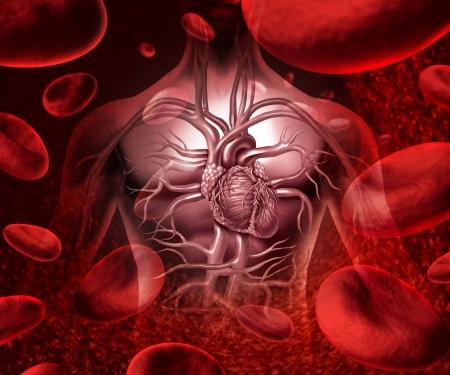 enfermedades del corazon: Blood sistema y circultaion con un icono de coraz�n humano cardiovascular con la anatom�a de un cuerpo sano en un fondo con c�lulas de la sangre como un s�mbolo de salud m�dica de un �rgano interno como concepto de salud atenci�n m�dica Foto de archivo