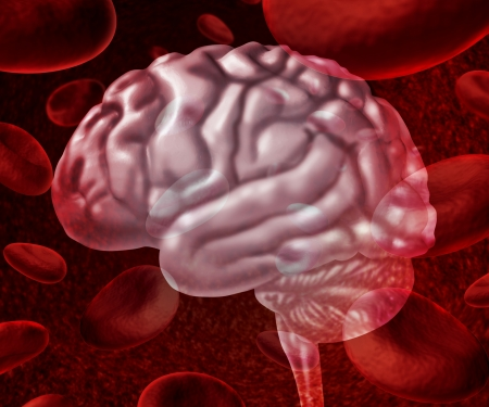 vasos sanguineos: Brain circulación de la sangre como células que fluyen a través de las venas y el sistema circulatorio humano que representa un símbolo de salud médica relacionada con el accidente cerebrovascular o problemas de neurología