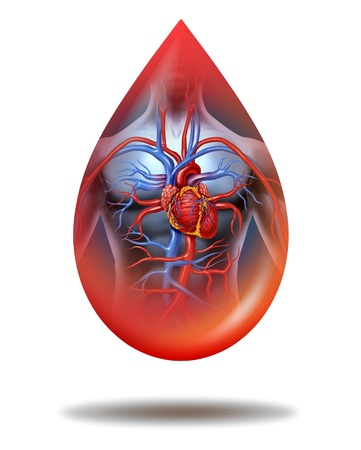 clean blood: Human heart blood drop with a human body anatomy and cardiovascular heart circulation system as a symbol of health care and medicine on a white background