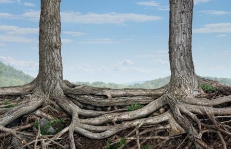 Sterk partnerschap en de stichting als een business concept van stabiliteit en loyaliteit met twee bomen met wortels samen als een symbool van overeenkomst en samenvoegen krachten met elkaar verbonden voor succes