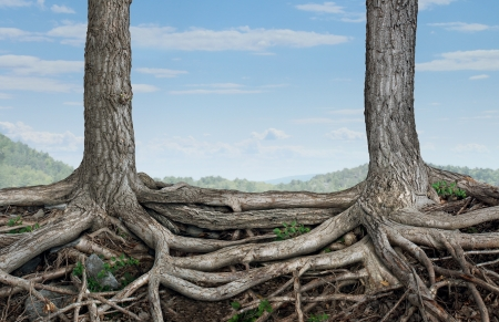 merging together: Strong partnership and foundation as a business concept of stability and loyalty with two trees with roots connected together as a symbol of agreement and merging forces together for success