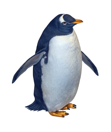north pole: Penguin isolated on a white background as a wildlife nature and conservation symbol of arctic birds living in the south or north pole  Stock Photo