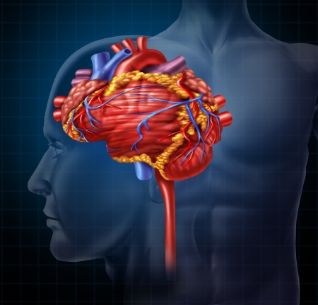 coraz�n y cerebro: Cerebro en forma de coraz�n de �rganos humanos como la inteligencia y la investigaci�n con una muestra de sangre de bombeo cardiovascular como s�mbolo de la salud m�dica y mental para las neuronas activas en el cuerpo sobre un fondo negro