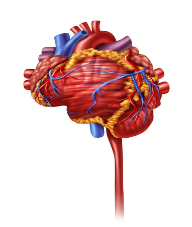 Human heart intelligence and research with a cardiovascular pumping organ in the shape of a brain as a medical and mental health care symbol for active neurons in the body  photo