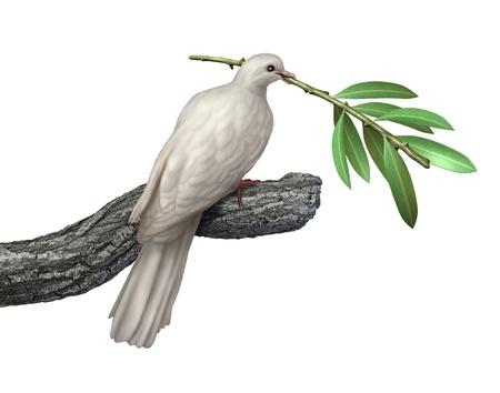 rama de olivo: Paloma que sostiene una rama de olivo aislada en un fondo blanco como s�mbolo de paz y tranquilidad y esperanza para el futuro de la humanidad en el camino de los derechos humanos y la libertad Foto de archivo