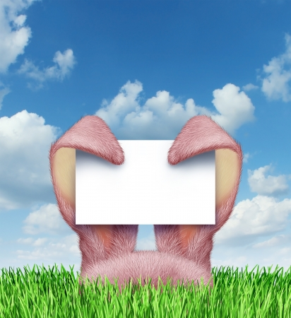 Easter bunny sign with pink rabbit ears holding a blank sign card on a spring blue sky popping up from green grass as a symbol of a fun holiday celebration advertising message