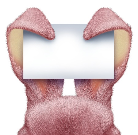 Easter rabbit pink ears holding a blank sign card with detailed textured realistic fur as a fun spring symbol of holiday celebration as an advertising message on a white background Stock Photo - 17229339