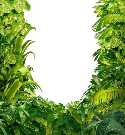 Tropische jungle als een leeg frame met rijke groene planten als varens en palmbladeren gevonden in het zuiden van warme klimaten zoals Zuid-Amerika Hawaii en Azië met een witte geïsoleerde kopie ruimte centrum Stockfoto