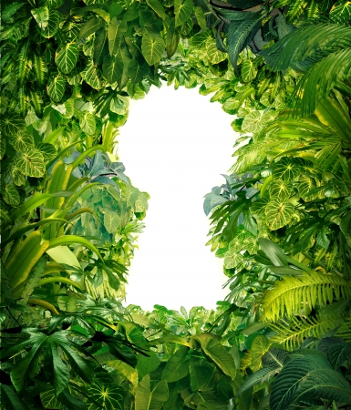 survive: Out of the jungle as a concept of freedom and success from chaos and confusion with a thick green rainforest as a group of tropical plants in the shape of a blank white glowing key hole