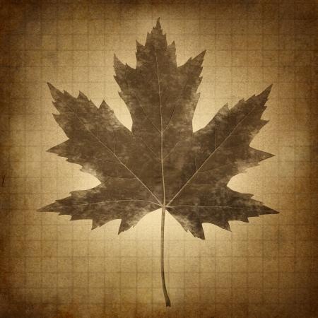 seasonal symbol: Grunge hoja de arce en un viejo papel sucio pergamino marr�n arenoso como un s�mbolo de la naturaleza estacional de invierno, verano, primavera y oto�o y los problemas de conservaci�n del entorno