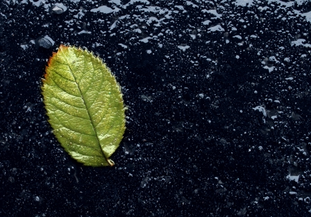 winter thaw: Wet single fallen green leaf on black asphalt as a symbol of renewal and hope after winter or before spring season with reflections as an icon of urban environment life