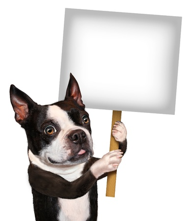 advertise: Dog holding a blank sign as a Boston Terrier with a smiling happy expression advertising and communicating a message pertaining to pet care and veterinary issues on white