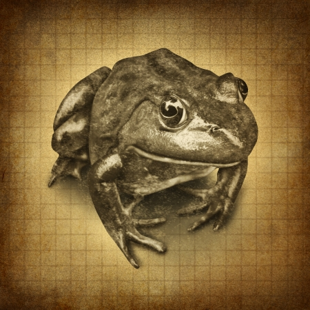 Frog on an old grunge parchment texture as a symbol of conservation and protecting wildlife and all of nature for the  environmental goal of clean land and water  photo