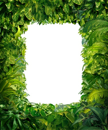 forest conservation: Jungle border blank frame with rich tropical green plants as ferns and palm tree leaves found in southern hot climates as south America Hawaii and Asia with framed white isolated copy space center  Stock Photo