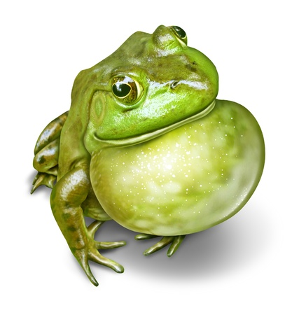 inflated: Frog with an inflated throat as a green amphibian communicating as a natural symbol of animal conservation and environmental education for a healthy fresh water ecosystem
