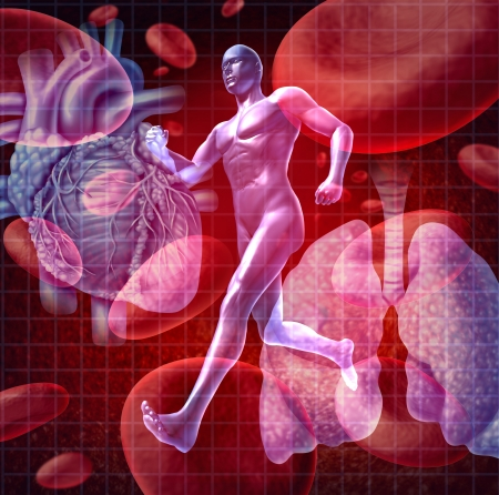 internal organ: Cardiovascular system as a health care and medical concept with a human heart and lungs on red blood cells and an athlete runner as a physical fitness symbol for a healthy lifestyle