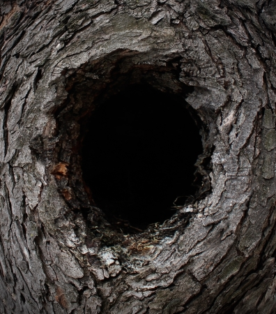 black hole: Nature tree frame made with a forest pine bark shaped as a framed composition with a blank black hole in the middle with copy space as a conservation and wild outdoors living concept  Stock Photo