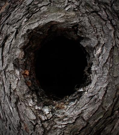 zwart gat: Natuur boom frame gemaakt met een bos pijnboomschors de vorm van een ingelijste compositie met een leeg zwart gat in het midden met kopie ruimte als het behoud en wilde buiten wonen begrip