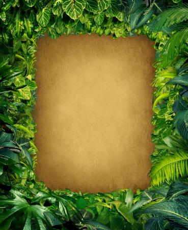 ferns: Marco salvaje selva fronteriza con abundantes plantas tropicales verdes como helechos y hojas de palma se encuentran en climas c�lidos del sur de Sudam�rica Hawai y Asia central con espacio enmarcado pergamino copia