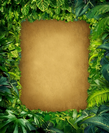 fauna: Wild jungle border frame with rich tropical green plants as ferns and palm tree leaves found in southern hot climates as south America Hawaii and Asia with framed parchment copy space center