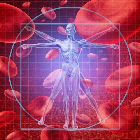 anatomie mens: Gezondheidszorgonderzoek medische concept met een Vitruvius menselijk skelet mens en lichaam met een groep van zwevende rode bloedcellen circuleren in een ader Stockfoto