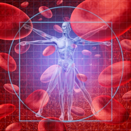 body blood: Health care research medical concept with a Vitruvian human skeleton man and body with a group of floating red blood cells circulating in a vein