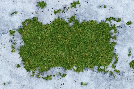 winter thaw: Spring thaw frame with meting cold white snow disappearing and exposing green grass underneath the frosted ice with a blank area for copy space as a symbol of renewal and springtime concept