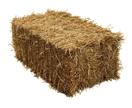 Bale of hay isolated on a white background as an agriculture farm and farming symbol of harvest time with dried grass straw as a bundled tied haystack