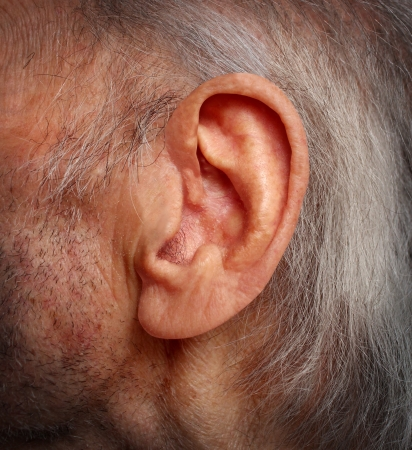 deaf: Aging hearing loss with an elderly ear close up of an old man with grey hair as a health care medical concept of losing the ability and human sense of hearing due to age and disease