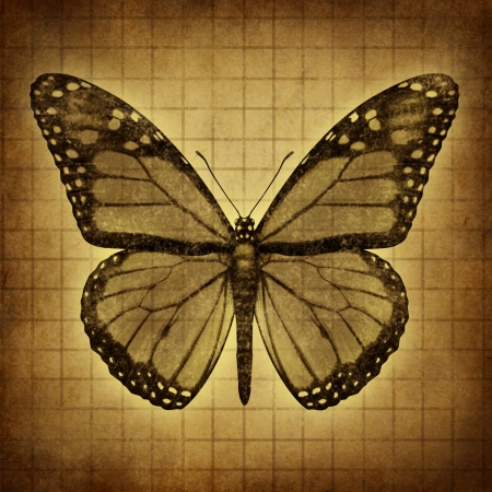north american butterflies: Monarch Butterfly on an old grunge texture parchment paper with open wings in a top view as migratory insect butterflies for entomology education and nature conservation