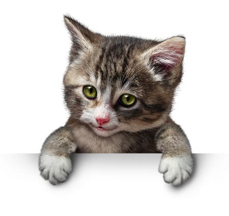 smiling cat: Cat or kitten holding a horizontal blank card sign as a cute feline with a smiling happy expression supporting and communicating a message pertaining to pet care on white. Stock Photo