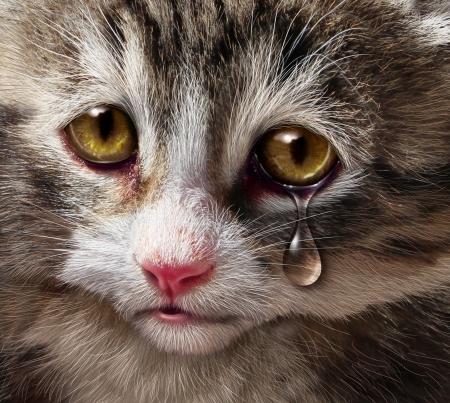 zooth�rapie: Violence envers les animaux et la cruaut� envers les animaux et la n�gligence avec un enfant qui pleure triste chaton chat regardant le spectateur avec une larme de d�sespoir comme un concept de la n�cessit� d'un traitement humain des �tres vivants