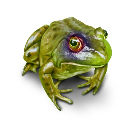 Frog with a black eye as a concept of environmental damage to nature and the destruction to the environment as a symbol of awareness to the importance of conservation as a hurt amphibian on a white background  photo