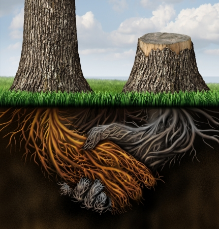 Broken partnership problems as two trees with roots shaped as a business handshake with one tree cut down and the root rotting as a concept of a lost or canceled contract and partner disagreement